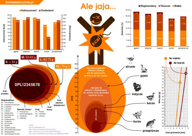 jaja-infografika-wszystko-o-jajkach