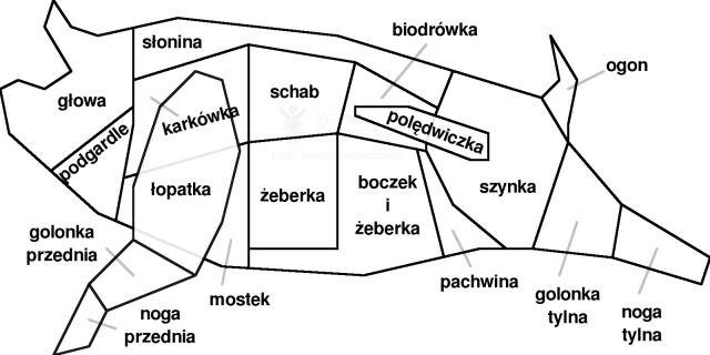 Podział półtuszy wieprzowej